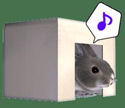 Expressive rabbit sticker sticker #6751456