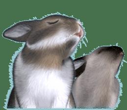 Expressive rabbit sticker sticker #6751464