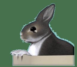 Expressive rabbit sticker sticker #6751471