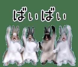 Expressive rabbit sticker sticker #6751474