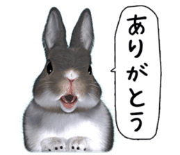 Expressive rabbit sticker sticker #6751479