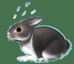 Expressive rabbit sticker sticker #6751480
