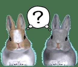 Expressive rabbit sticker sticker #6751481