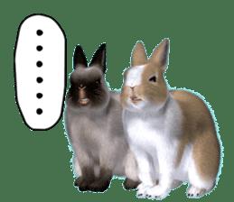 Expressive rabbit sticker sticker #6751482