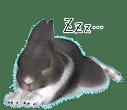 Expressive rabbit sticker sticker #6751483