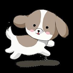 Shin Tzu dog that speaks the Kyoto valve