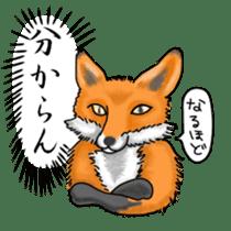 Raccoon and fox sticker #6833624
