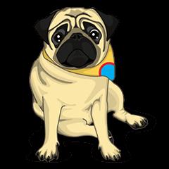 Maruchan the Pug