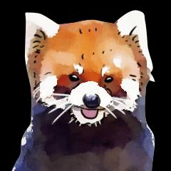 Watercolor red panda sticker
