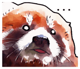 Watercolor red panda sticker sticker #6913716