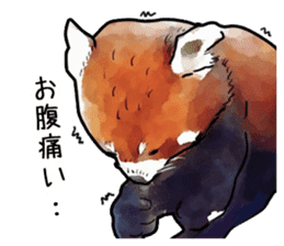 Watercolor red panda sticker sticker #6913719