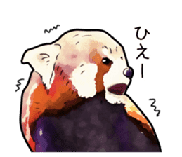 Watercolor red panda sticker sticker #6913740