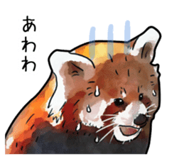 Watercolor red panda sticker sticker #6913741