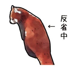 Watercolor red panda sticker sticker #6913743