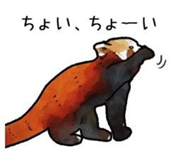 Watercolor red panda sticker sticker #6913744