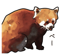 Watercolor red panda sticker sticker #6913746