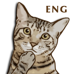 Brown Tabby! PENNE and CORNET -English-