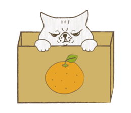 The daily life done freely of funny cat sticker #6937764