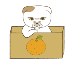 The daily life done freely of funny cat sticker #6937765