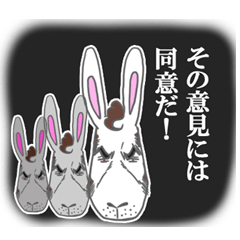 Rabbit executive director