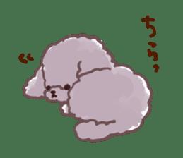 toy poodles2 sticker #6998412