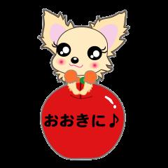 Chihuahua of Kansai dialect