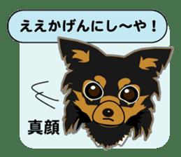 Chihuahua of Kansai dialect sticker #7011189