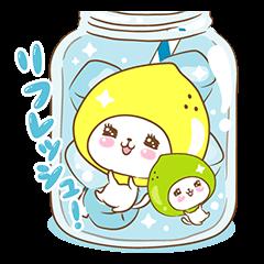 Lemon cat squash 2