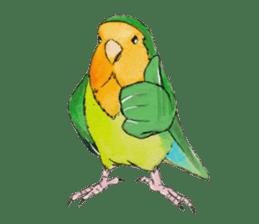 Everyday lovebird sticker #7024593
