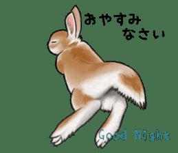 Latte and Rabbit's sticker #7064781
