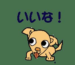 Chihua-tan of chihuahua sticker #7089563