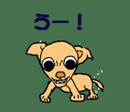 Chihua-tan of chihuahua sticker #7089564