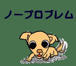 Chihua-tan of chihuahua sticker #7089566