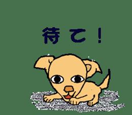 Chihua-tan of chihuahua sticker #7089567
