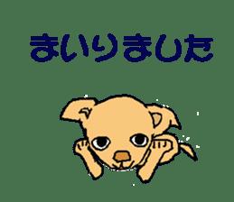 Chihua-tan of chihuahua sticker #7089568