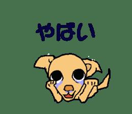 Chihua-tan of chihuahua sticker #7089575
