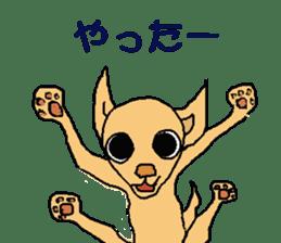 Chihua-tan of chihuahua sticker #7089581