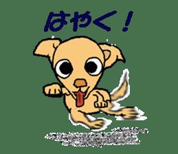 Chihua-tan of chihuahua sticker #7089598