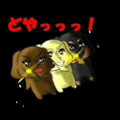 it is bowwow a trio