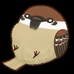 fat sparrow