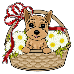Small brave dog Yorkshire Terrier