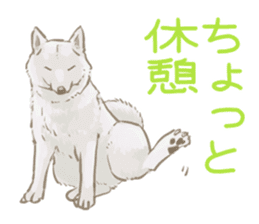6 kinds of Japanese dog sticker sticker #7151591