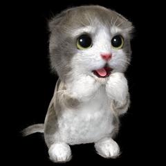 Cu Mohu Kitten EN