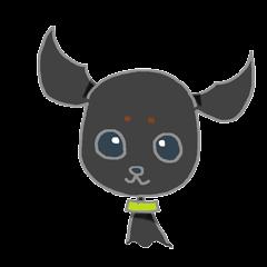 life of black dog