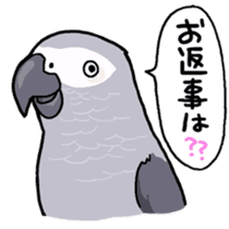 Cockatiel and Grey Parrot sticker #7242169