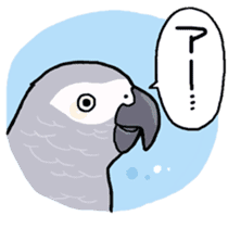 Cockatiel and Grey Parrot sticker #7242174