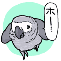 Cockatiel and Grey Parrot sticker #7242175