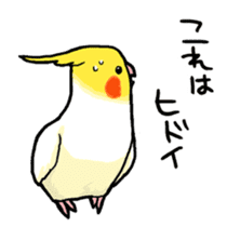 Cockatiel and Grey Parrot sticker #7242176