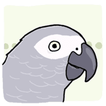 Cockatiel and Grey Parrot sticker #7242181