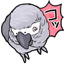 Cockatiel and Grey Parrot sticker #7242182